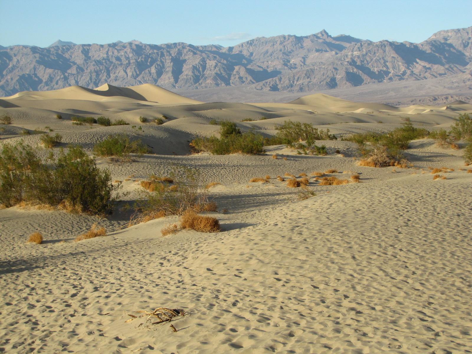 Mesquite Sand dune