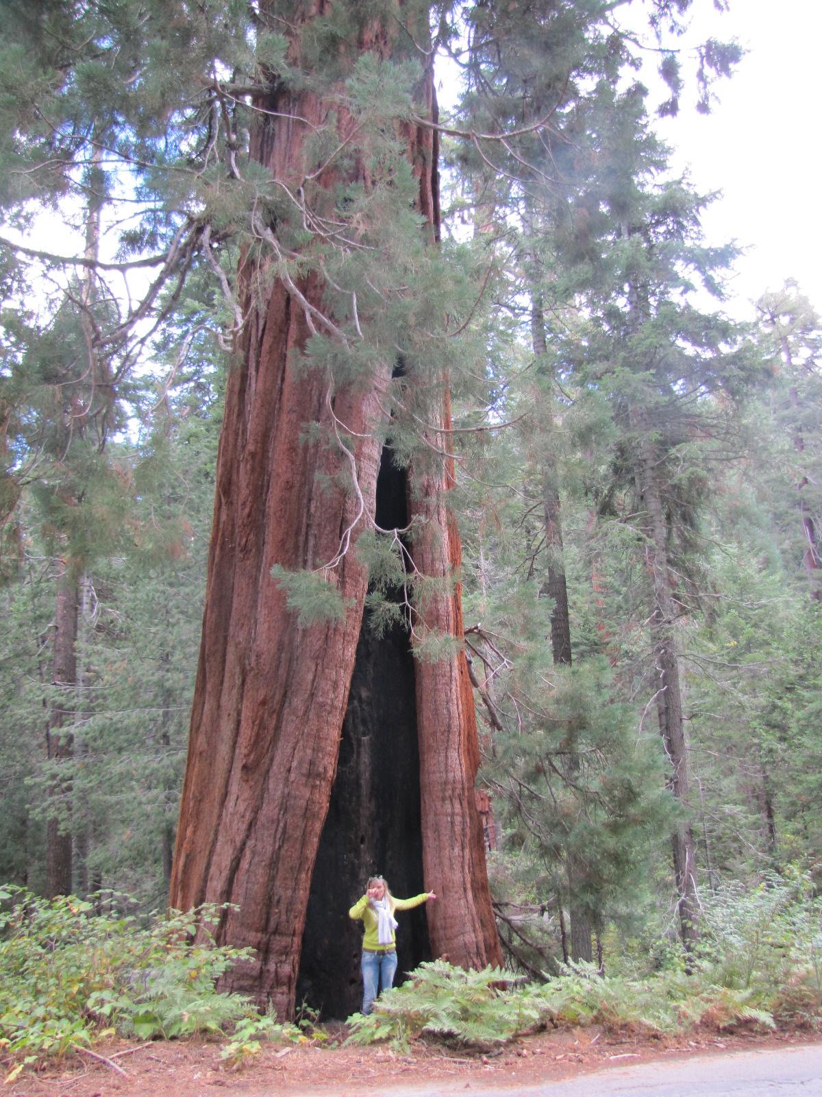 Anais devant un sequoia