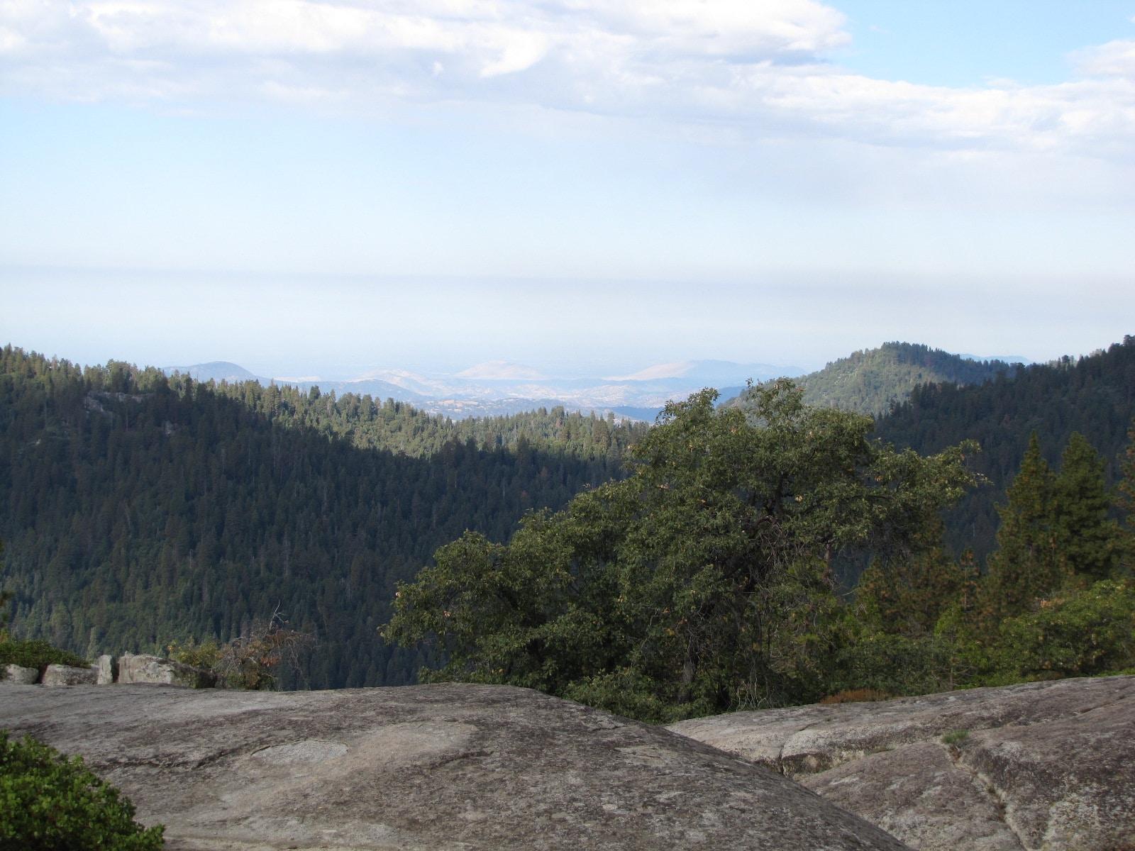 Vue depuis Beetle rock dans sequoia park