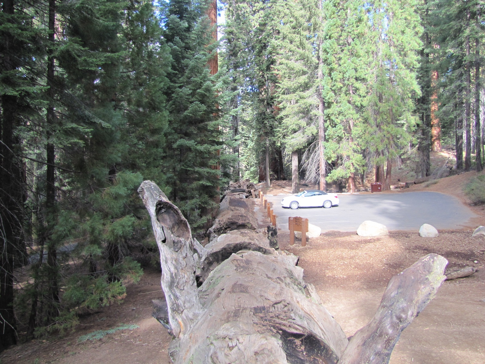 auto log sequoia park
