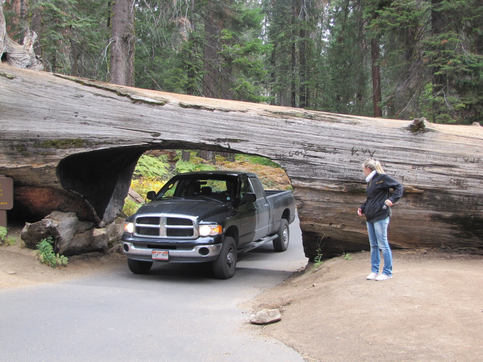 tunnel log sequoia park