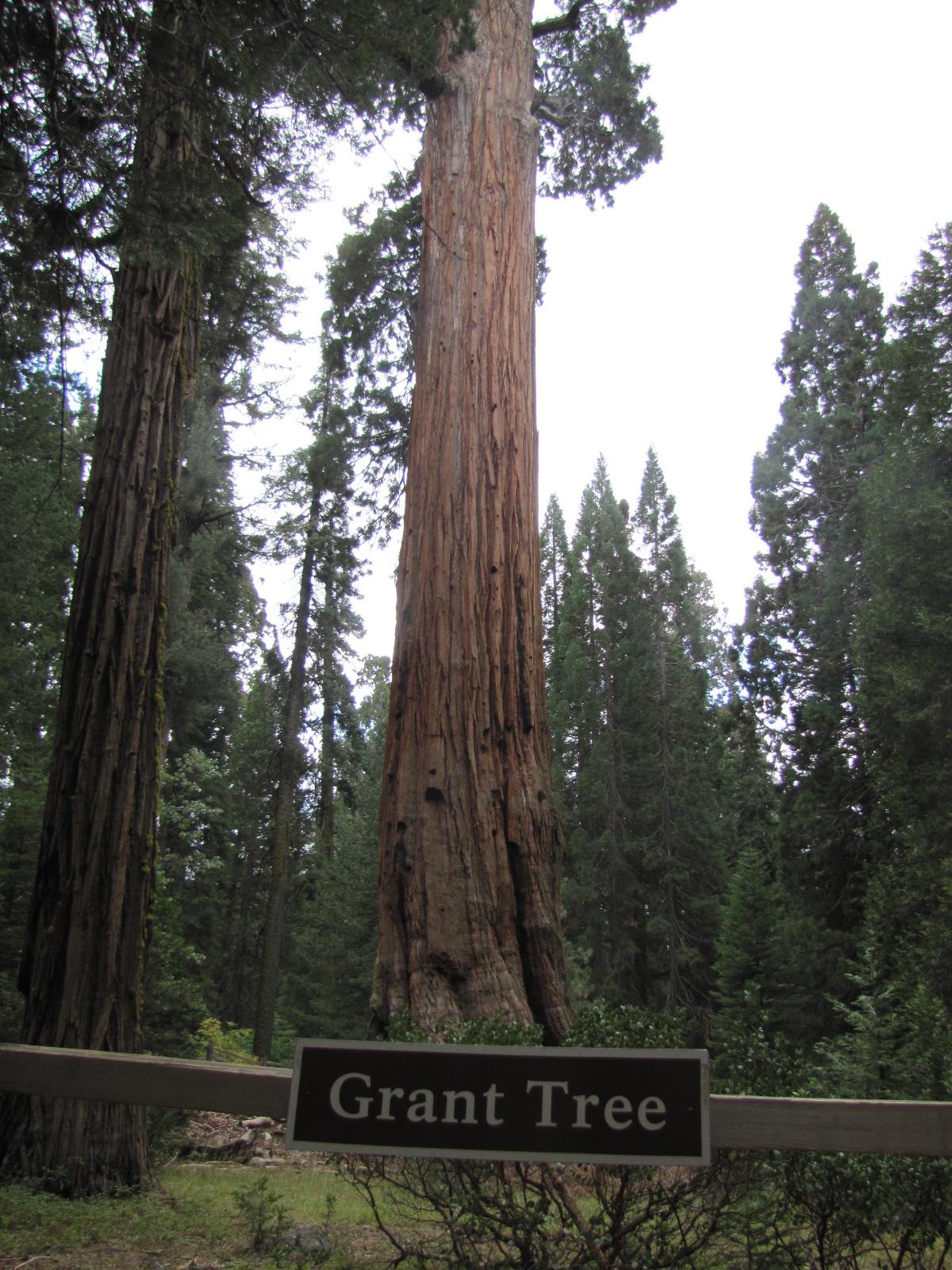 Général Grant sequoia Park
