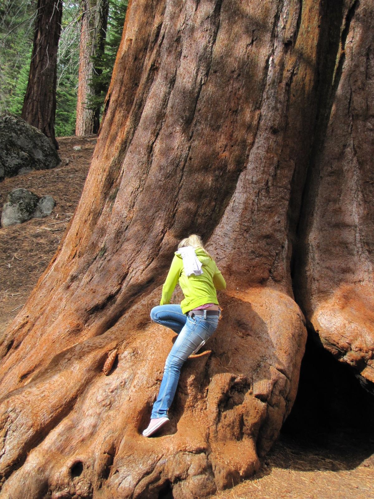 interdit de grimper sur les arbres