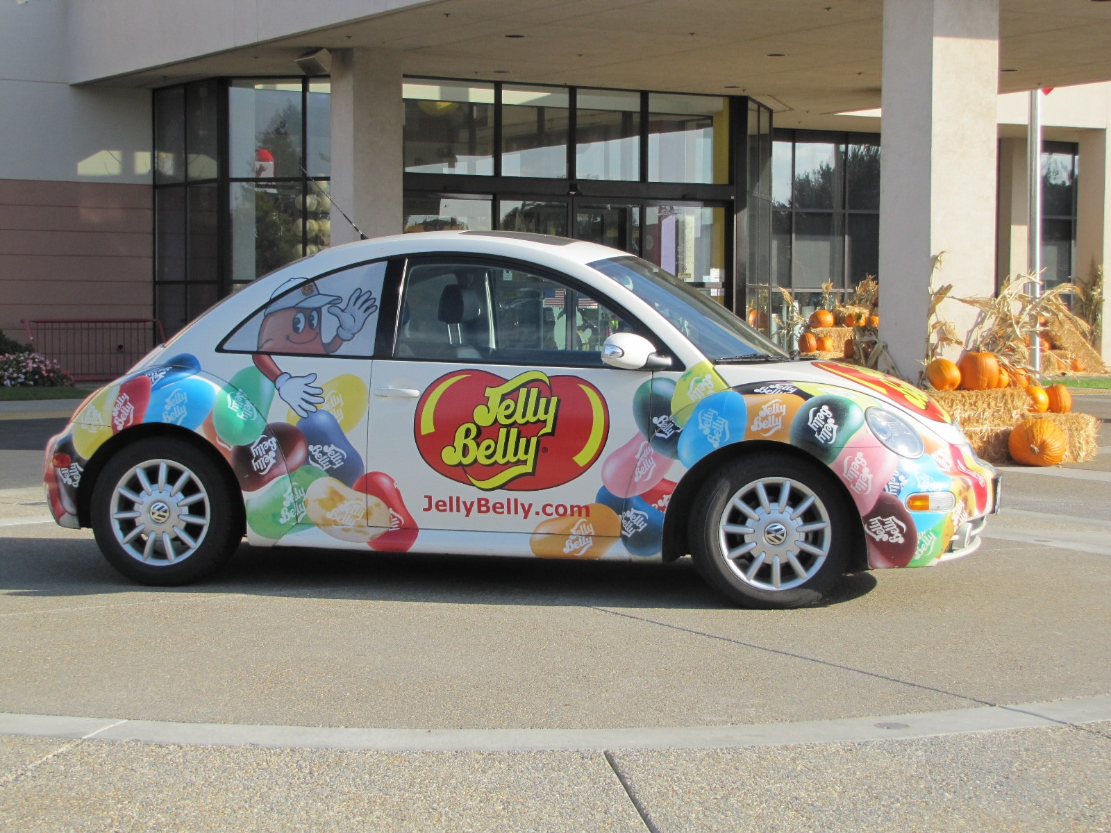 New Beetle Jelly Belly