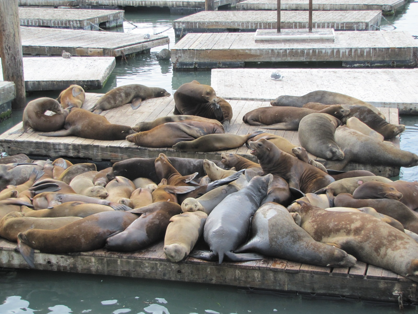 Colonie de Sea Lions